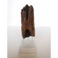 Dark Natural Driftwood Sculpture with White Base