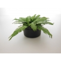 Fern Plant in Round Planter