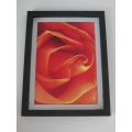 Orange Rose Print Thick Black Frame