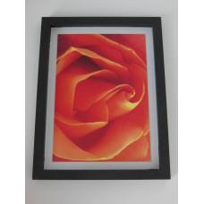 Orange Rose Print Thick Black Frame