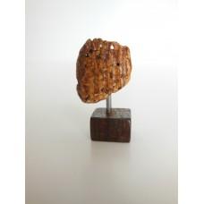 Shell Piece on Wood Base