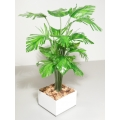 Fern Tree in White Square Planter
