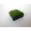 Blue Square Lucite Tray with Wheat Grass