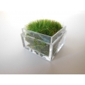 Clear Tall Square Lucite Tray with Wheat Grass
