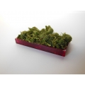Red Rectangle Lucite Tray with Moss