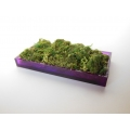 Purple Rectangle Lucite Tray with Moss