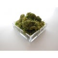 Clear Square Lucite Tray with Moss