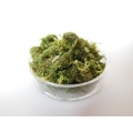 Clear Round Lucite Tray with Moss