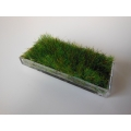Clear Rectangle Lucite Tray with Wheat Grass