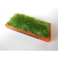 Orange Rectangle Lucite Tray with Wheat Grass