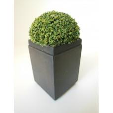 Shrub Plant in Tall Square Pot