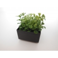 Leafy Plant in Short Square Pot