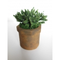 Large Rust Pot with Plant