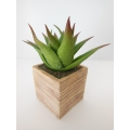 Large Square Sandstone Pot with Plant