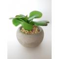 Round Concrete Pot with Plant