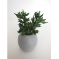 Round Short Pot with Plant