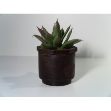 Large Rust Pot with Verde Plant