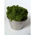 Stainless Pot with Moss Plant