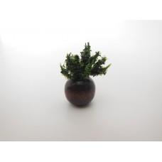 Brown Wood Vase