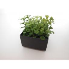 Leafy Plant in Short Square Pot